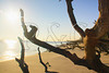 FL JACKSONVILLE BIG TALBOT ISLAND STATE PARK BONEYARD BEACH APRAB_MG_5683bMMW