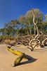 FL JACKSONVILLE BIG TALBOT ISLAND STATE PARK BONEYARD BEACH APRAB_MG_5969MMW