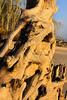 FL JACKSONVILLE BIG TALBOT ISLAND STATE PARK BONEYARD BEACH APRAB_MG_5650MMW