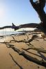 FL JACKSONVILLE BIG TALBOT ISLAND STATE PARK BONEYARD BEACH APRAB_MG_5819MMW