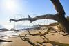 FL JACKSONVILLE BIG TALBOT ISLAND STATE PARK BONEYARD BEACH APRAB_MG_5809MMW