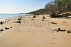 FL JACKSONVILLE BIG TALBOT ISLAND STATE PARK BONEYARD BEACH APRAB_MG_5982bMMW