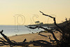 FL JACKSONVILLE BIG TALBOT ISLAND STATE PARK BONEYARD BEACH APRAB_MG_5629MMW