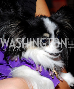 Fashion for Paws,April 9,2011,Kyle Samperton