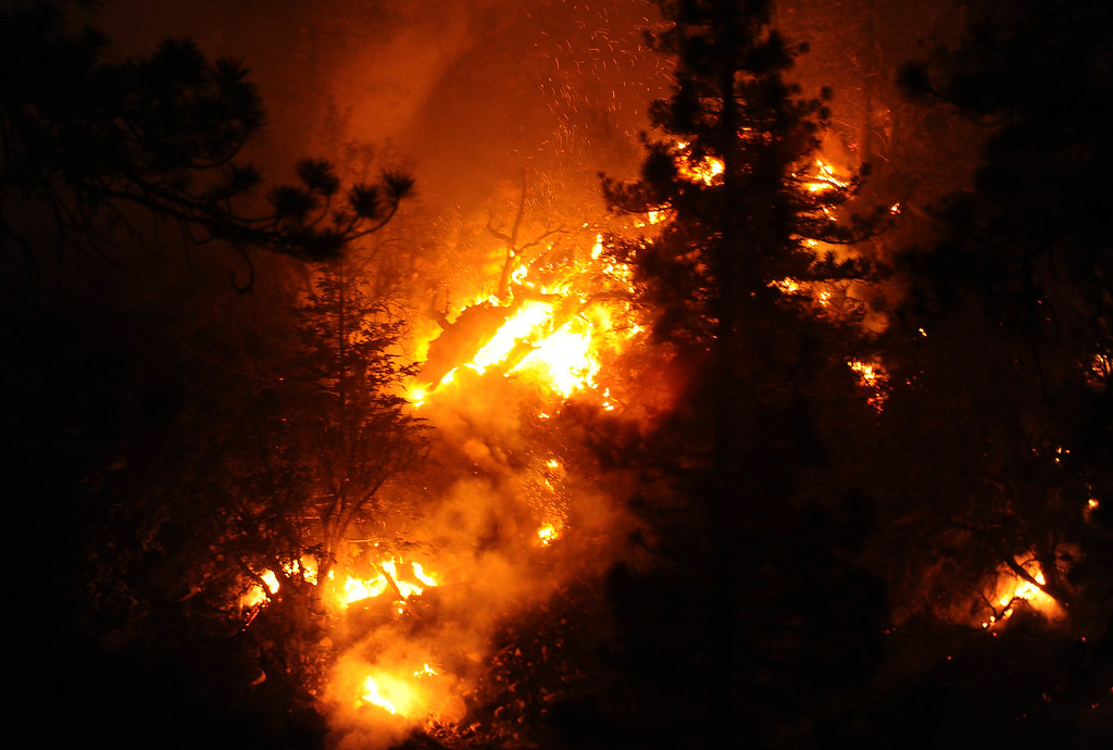 . Fire burns through tress during the Lake Fire along Hwy 38 in the San Bernardino National Forest on Saturday, June 20, 2015. (Photo by Keith Birmingham/ Pasadena Star-News)