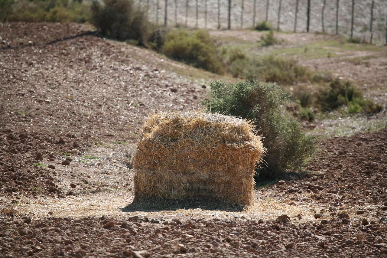 Hay or straw, used for feed