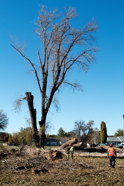 Matthew Gaaston | The Sheridan Press<br>A tree at 1352 Avoca Place is the last one scheduled to be removed due to center rot by Executive Branch Tree Service Tuesday, Oct. 16, 2018.