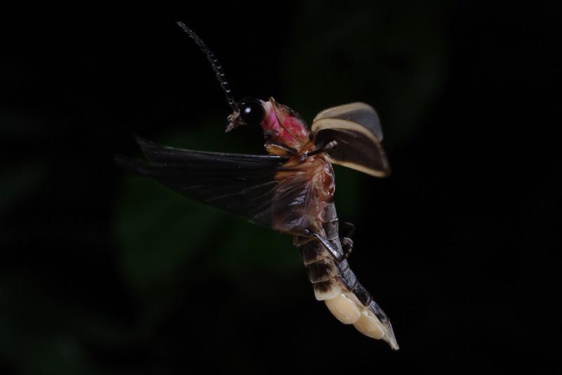 Firefly_2011_07_04_130