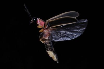 Firefly_2011-06-25_126