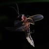 Firefly_2011_07_04_136