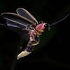 Firefly_2011-06-25_168