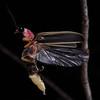 Firefly_2011_07_08_097