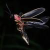 Firefly_2011-06-24_340