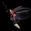 Firefly_2011-06-24_304