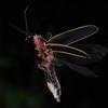 Firefly_2011_06_26_088