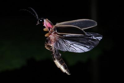 Firefly_2011-06-24_406