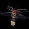 Firefly_2011-06-24_370
