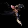 Firefly_2011-06-19_132