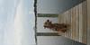 012 Murphy on dock