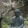 A statue of the Buddha under the plums. Tokeiji, Kita-Kamakura.