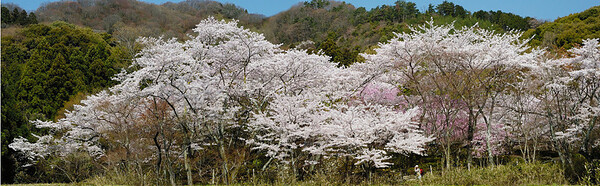 Shojiji Panorama