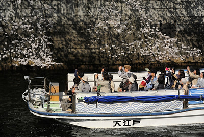 Cherry viewing, Meguro