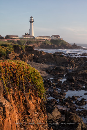 Sunlit Iceplant on Cliff at Pigeon Point