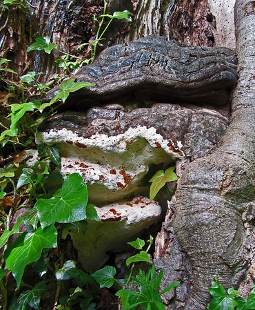 Fungi 2013