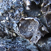 August 8, 2012 - Lichen on the Pacific Crest Trail to Hobart Bluff, Cascade-Siskiyou National Monument, Oregon