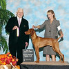 BOB (5 pt GCH Major) and made the cut int he Group the day after finishing just shy of a year old.