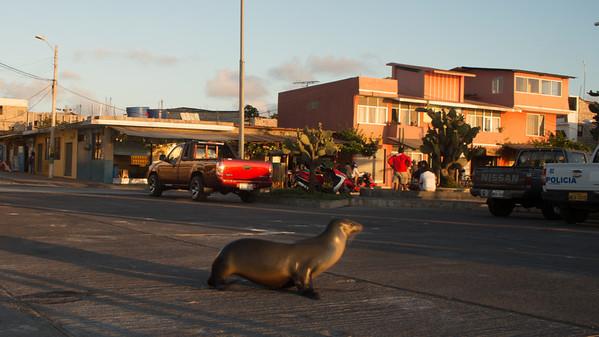 San Cristobal, Galápagos.