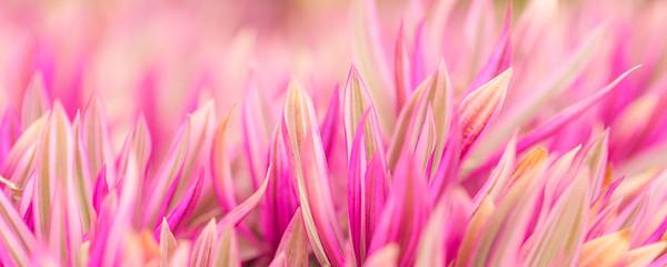 Tropical Pink II