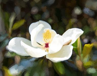 Lone Magnolia V