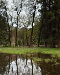 Cook's Meadow