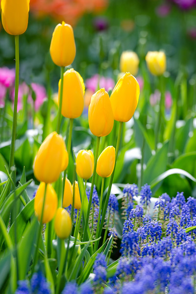 Friendship I