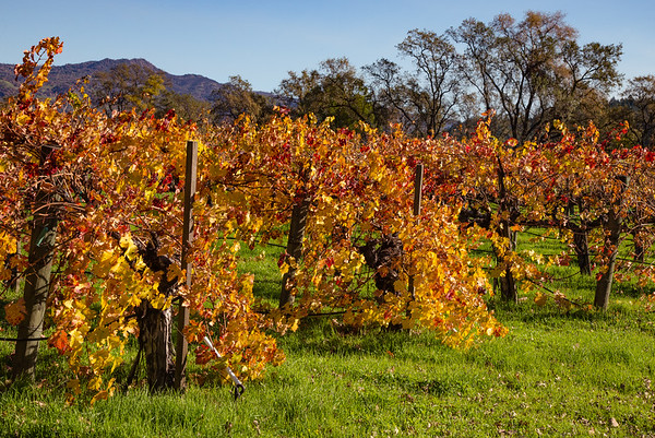 Fall in Napa Valley I