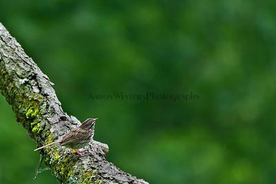 Bokeh bird 2012