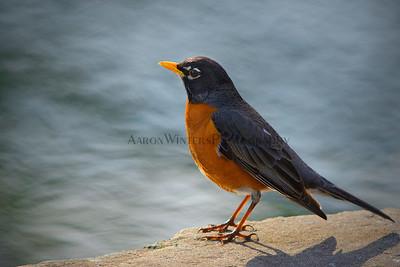 Bird Of Paradise 2012