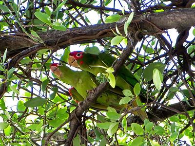 Birds of Guadalajara area, 10-22-14 to 10-31-14