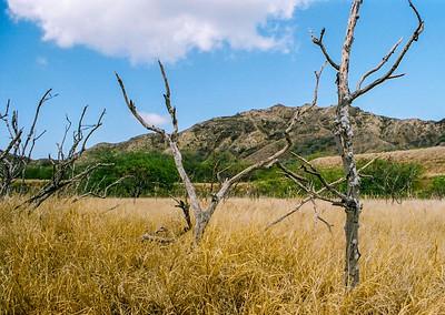 Grasslands inside Diamond Head crater.