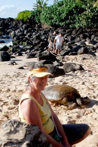 North Shore's Laniakea Beach, Green Sea Turtle (honu) sanctuary.