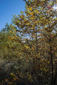 Hellhole Canyon-8522
