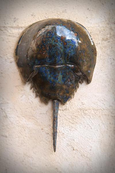sn756.  Brown & Blue Swirl Horseshoe Crab
