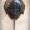 sn756.  Brown & Blue Swirl Horseshoe Crab