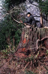 Bowhunter using a recurve bow waits on top of an old growth tree stump in the Coast Range of Washington State for a shot at a blacktail deer.