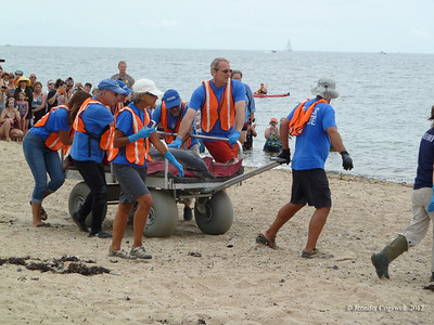 IFAW - Release of Stranded Dolphins - Herring Cove 8.12