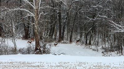 Jan14-winter-11
