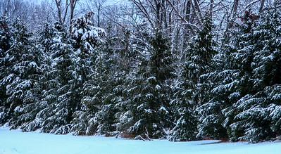 Jan14-winter-7