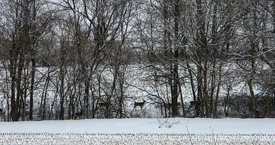 Jan14-winter-10