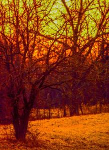 hedge-sunset